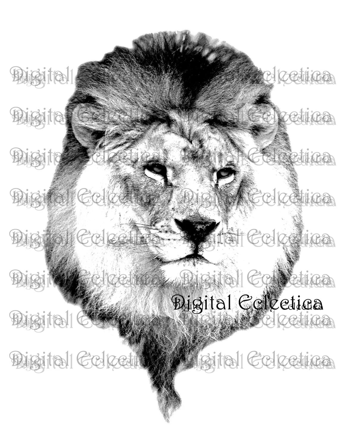 Male Lion Engraving Lion Lion Prints Lion Images Lion
