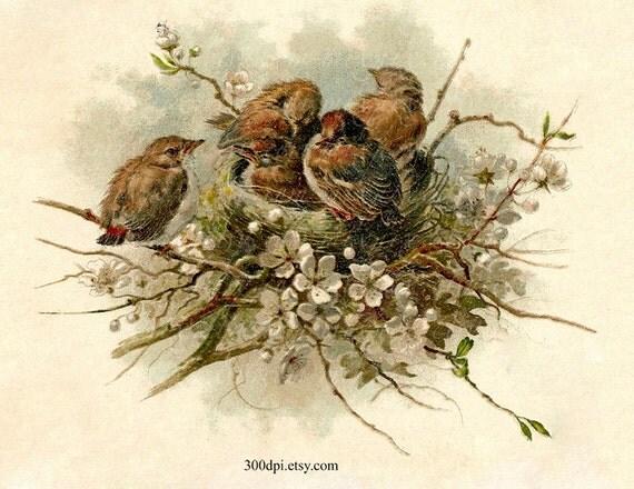 Nest Digital Scan Vintage Postcard Printable Download By
