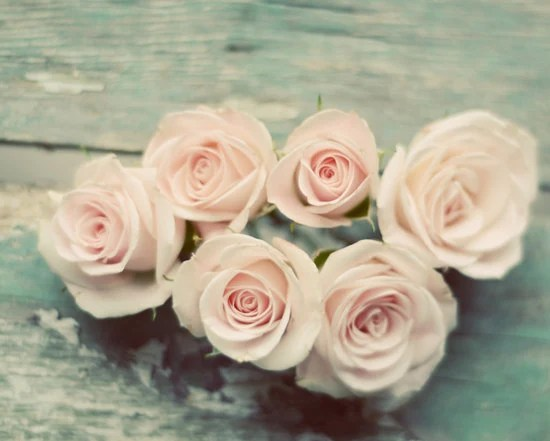 Rose photograph- pink, pastel, pale, light, romantic, mint, shabby chic, flowers, rustic, muted colors, still life, fine art print, 8x10 - dullbluelight