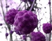 oriental - purple - paradisereal