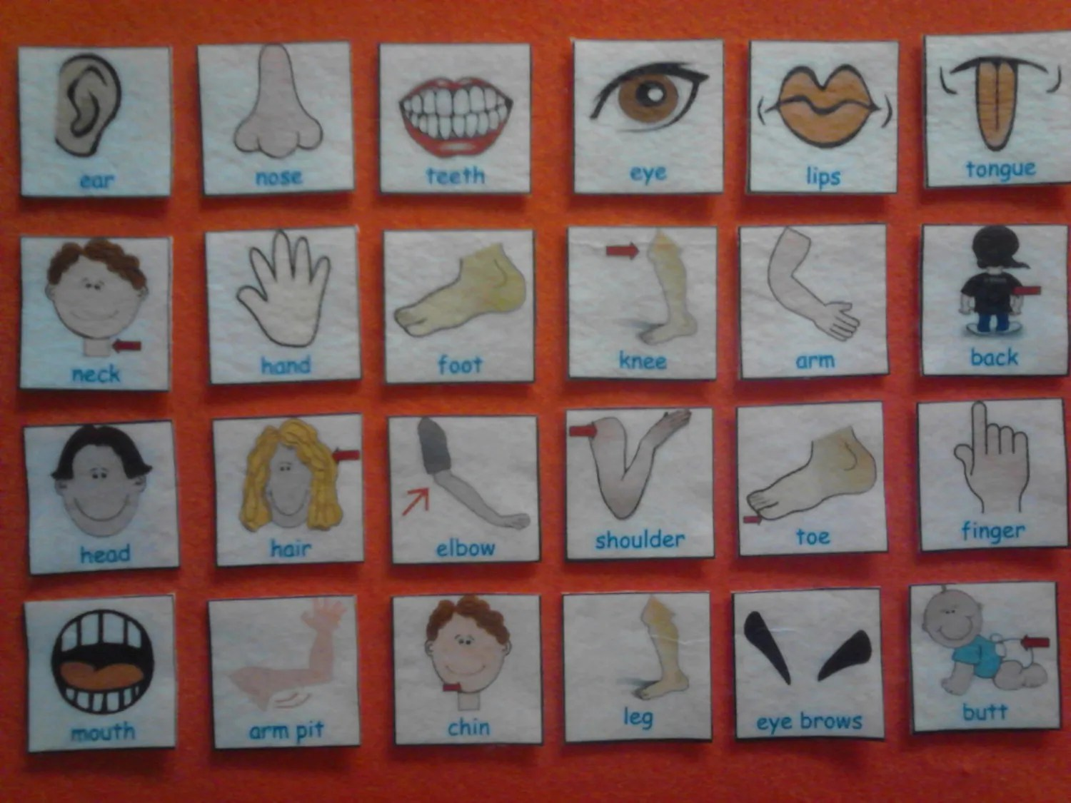Body Parts Human Body Parts Spanish Or English Preschool