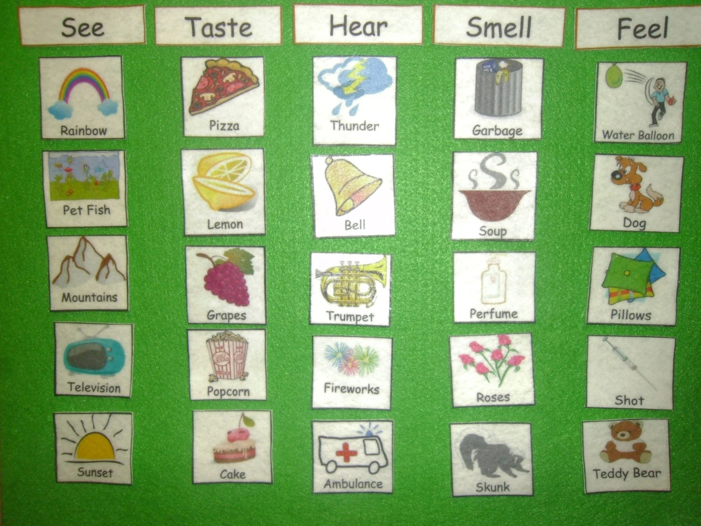 5 Senses Five Senses Felt Or Laminated Match See
