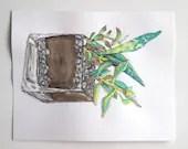 Succulent watercolor painting original terrarium plant cactus art by Jennifer Allevato - jenniferallevato