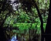 Atchafalaya Swamp Basin, ...