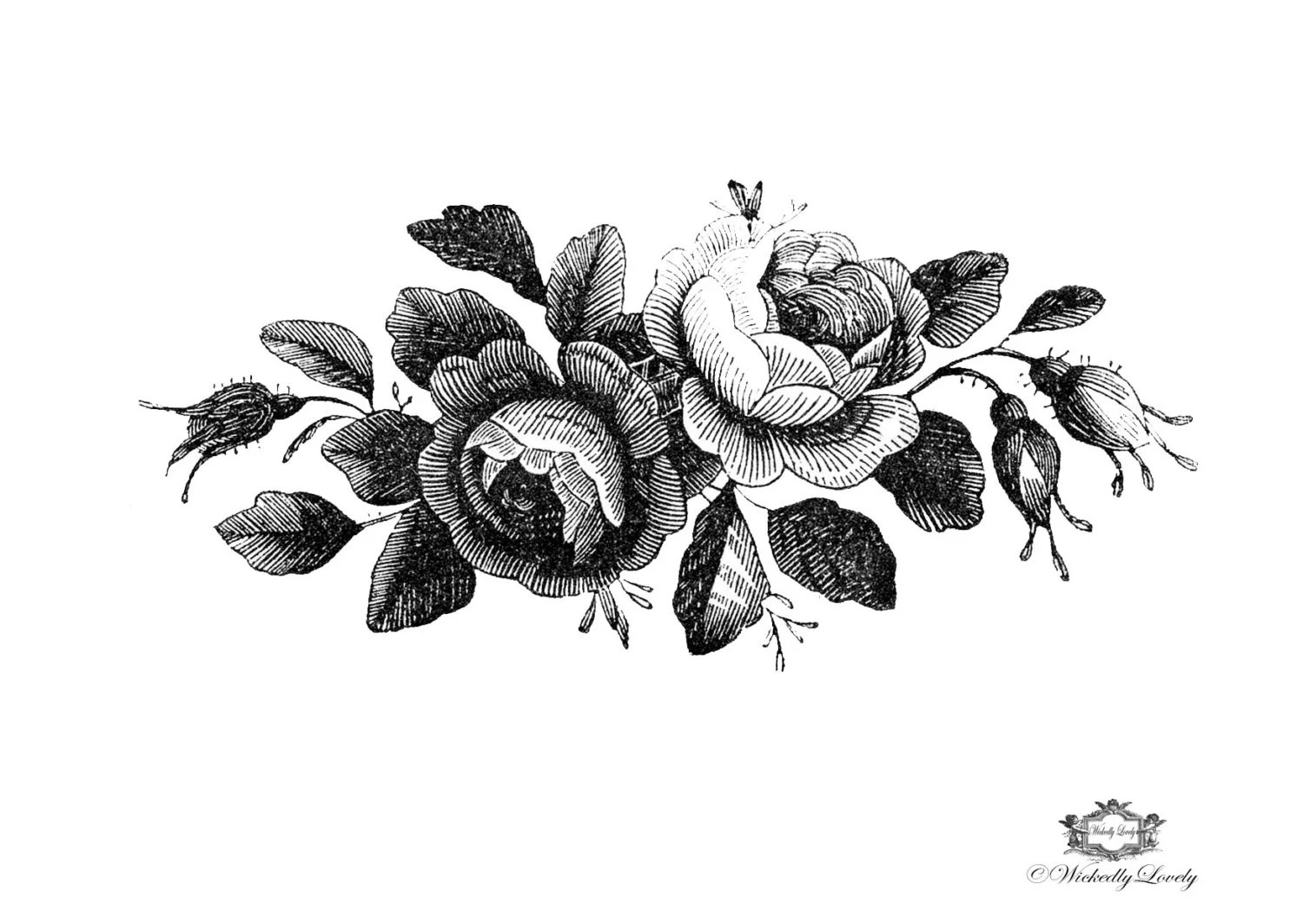 Black And White Victorian Roses Illustration Wickedly Lovely