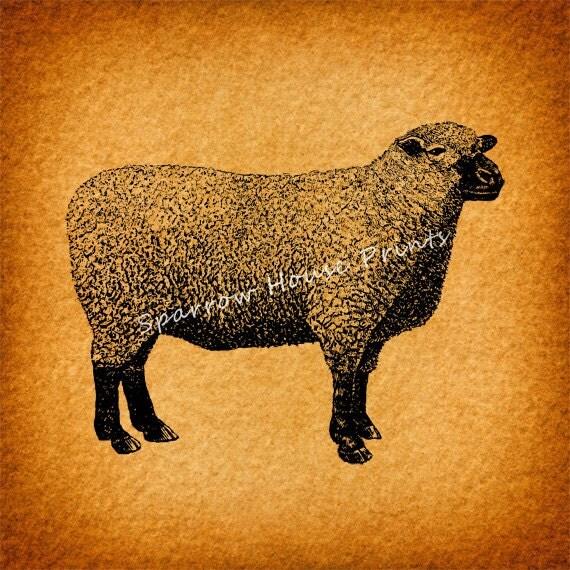 Antique Art Southdown Sheep Artwork Wall Art Vintage Sheep