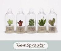 Set of 5 Secret Surprise Dome GemSprout Pendants