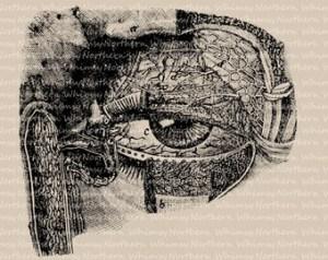 Eye diagram   Etsy