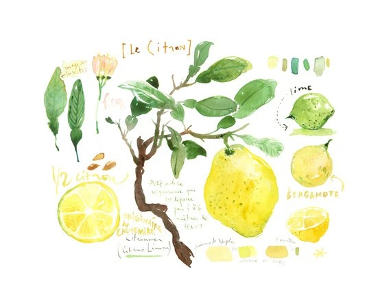 Lemon print, Kitchen art, Lemon tree watercolor painting, Botanical poster, Fruit print, Yellow kitchen decor, Home decor, Kitchen wall art