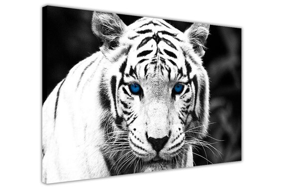 White Tiger With Blue Eyes On Framed Canvas Wall Art Pictures