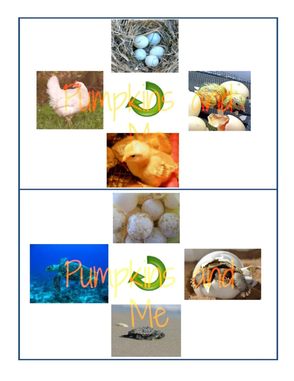 Life Cycles Preschool Learning Montessori Materials