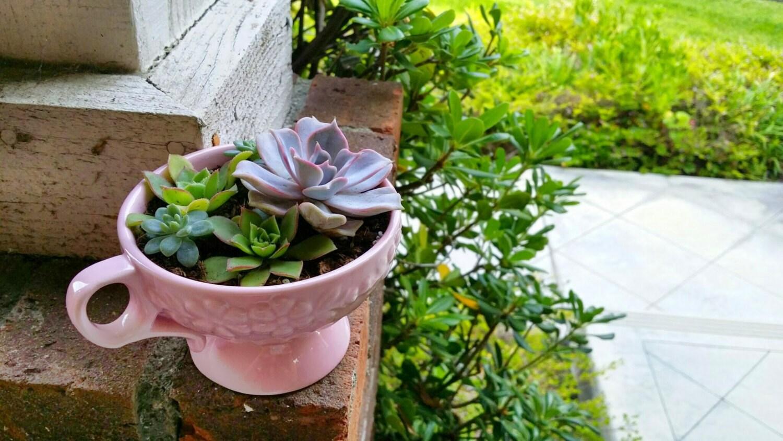 Pretty Pink Rustic Teacup With Succulent Arrangement PLANTS