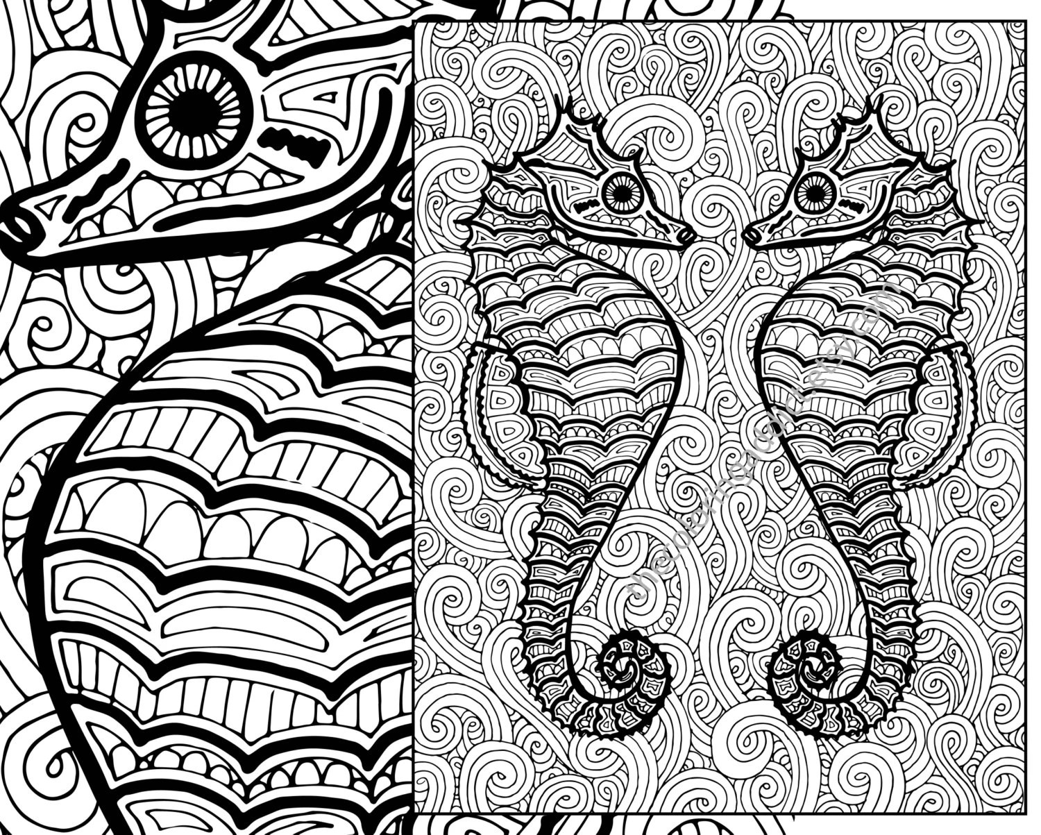 seahorse coloring page adult coloring sheet by thecoloringaddict