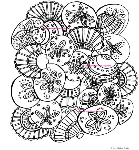 shells coloring page adult colouring hand drawn image
