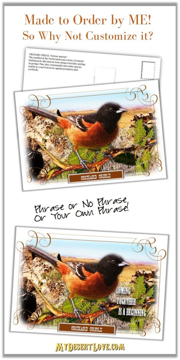 Oriole Bird Photo postcar...