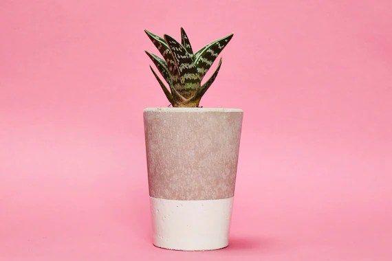 Concrete Planter, Cactus/ Succulent Plant Pot, Handmade, Cream White, Tall Size- Includes Cactus or Succulent