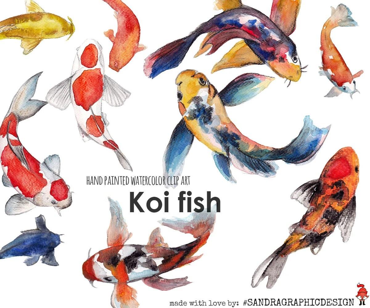 Koi Fish Clip Art Hand Painted Watercolor Clip Art 5242