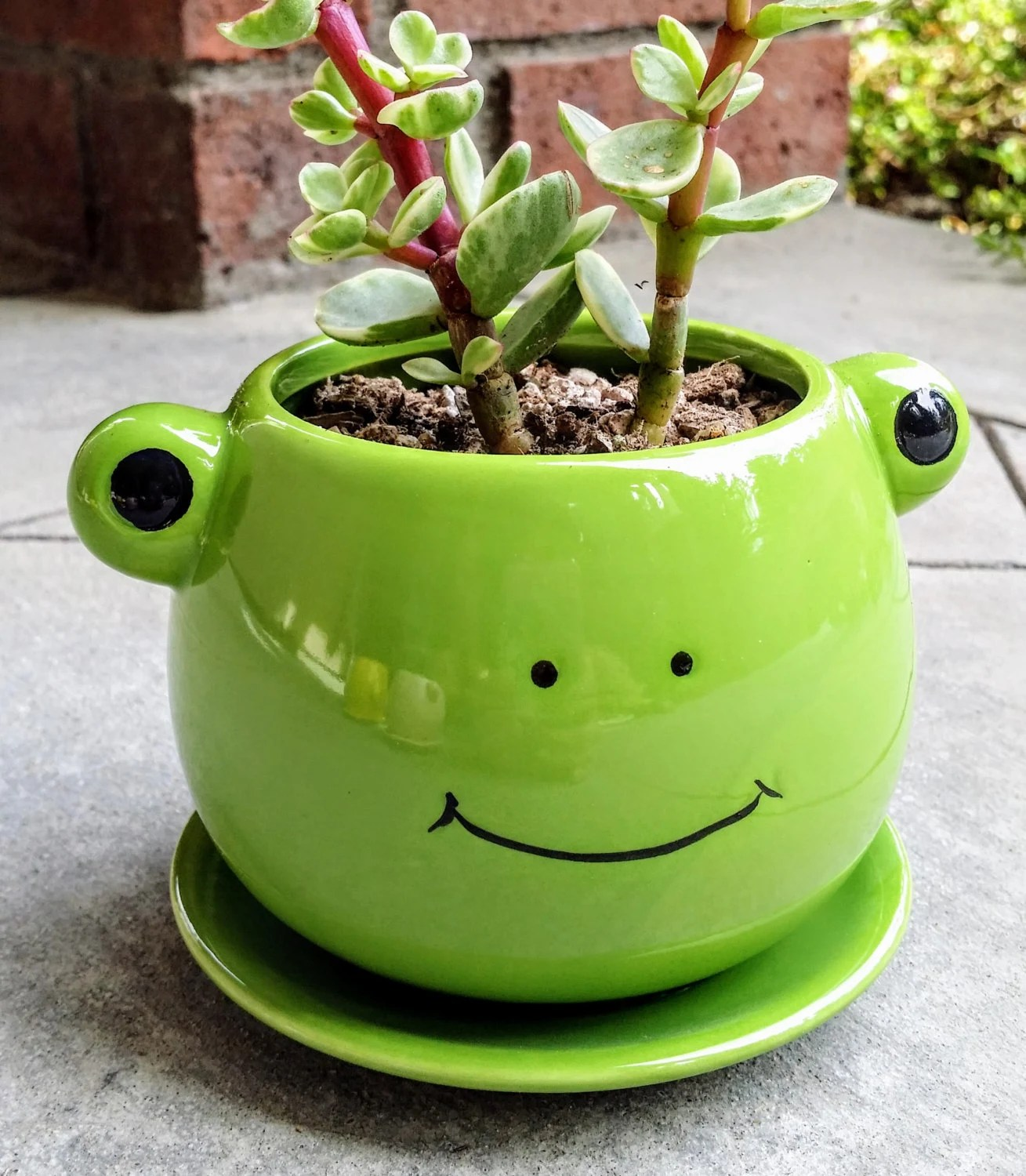 Cute FROG Planter With Succulent PLANT INCLUDED