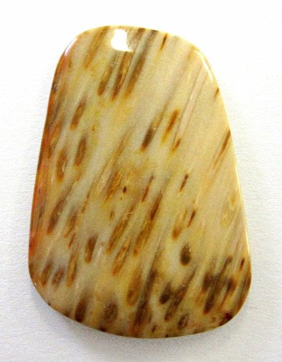 Striking Pattern Petrified Palm Wood Cabochon From