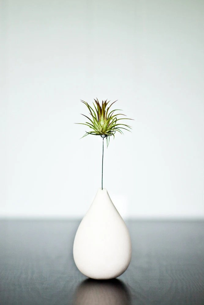 Air Plant with Custom Plaster Vase - REDCROWNED