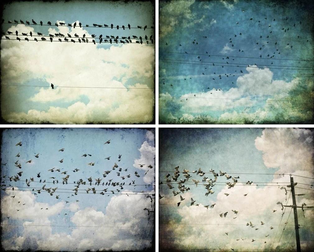 Save 30% Bird Photography Set of Four 8x10 Bird Prints, Bird Art Prints, Fine Art Bird Photographs by Tricia McKellar