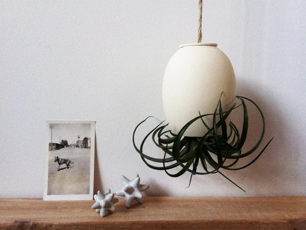 LARGE Hanging Air Plant Pod (tm)  - Natural Buff