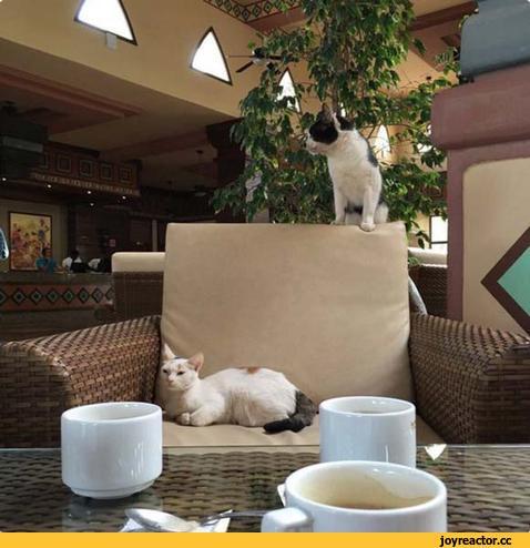котэ,прикольные картинки с кошками