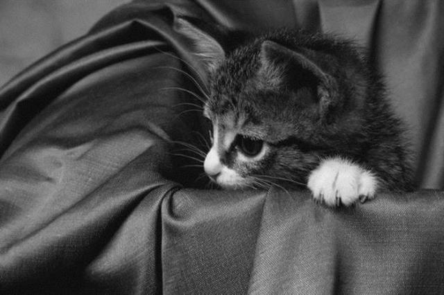 Позитивные эмоции. Черно белые котята (22 фото)