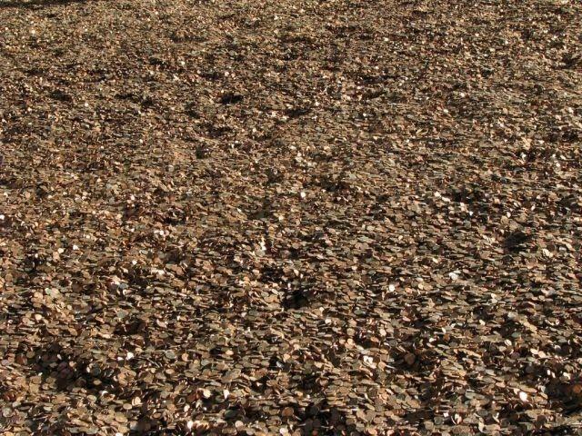 Море денег (23 фотографии)