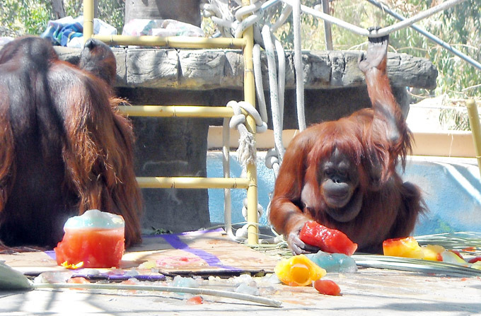 Жара в зоопарках: фото спасающихся животных