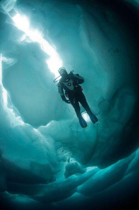 Ледовый дайвинг (15 фото)