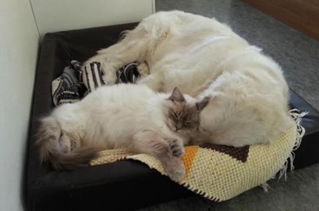 Не пропустите! Интересные факты о кошках и собаках
