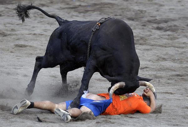 Бык раздевает футболиста