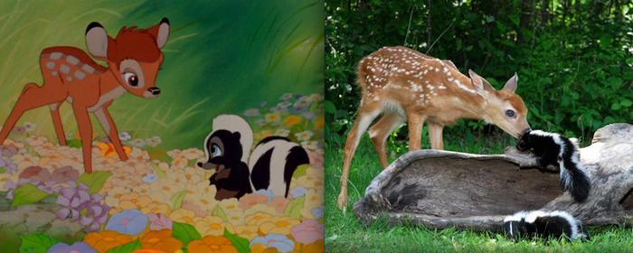 Как выглядят животные из мультиков Диснея в реальной жизни