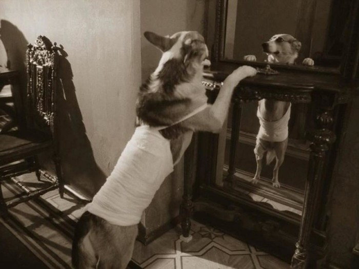 Любопытное о кинокартине «Собачье сердце»