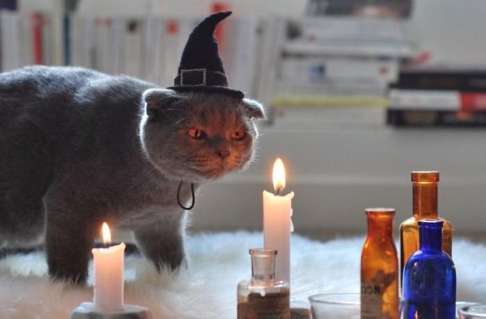 Почему люди боролись с кошками? Дикие нравы Средневековья