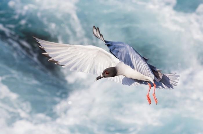 Фотографии победители конкурса Galapagos Conservation Trust Photography Competition