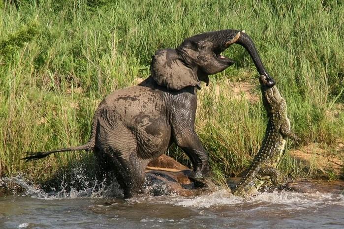 Зачем слону хобот нужен?