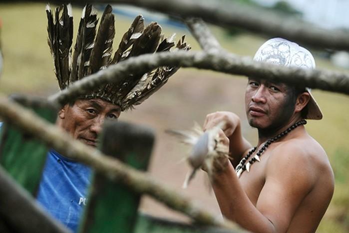 Сохранившиеся племена людоедов, где туристов будут пытать, резать, убивать и есть