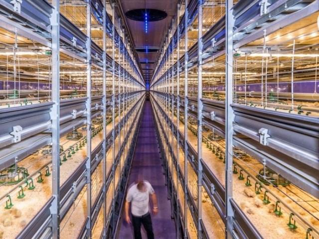 Нидерландские инновационные технологии в сельском хозяйстве и животноводстве