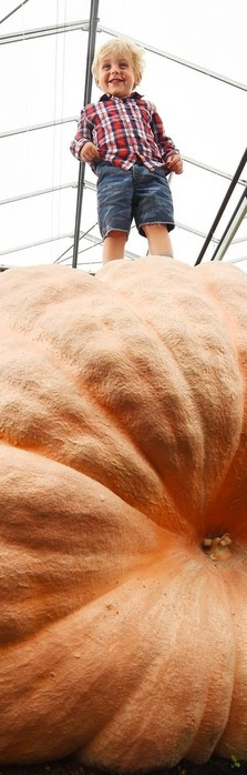 Новый рекорд: тыква монстр, весом более тонны