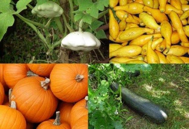 10 самых необычных секретов и любопытных фактов о тыквах