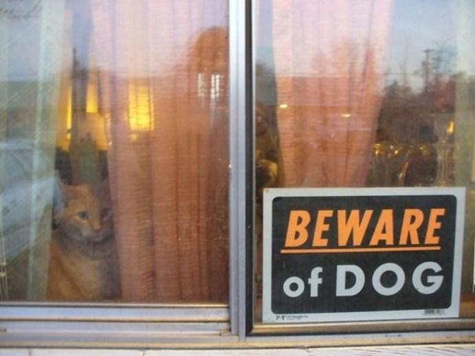Осторожно, злые собаки! Но их почему то хочется немедленно погладить