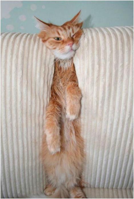 Доказательства, что наши коты— пришельцы. 17 фотографий