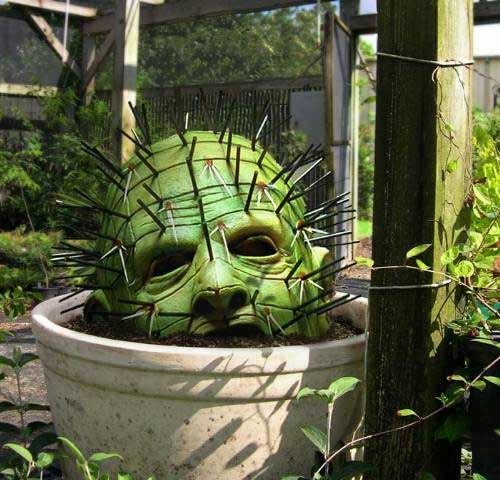 Интересные факты о кактусах, в которые трудно поверить
