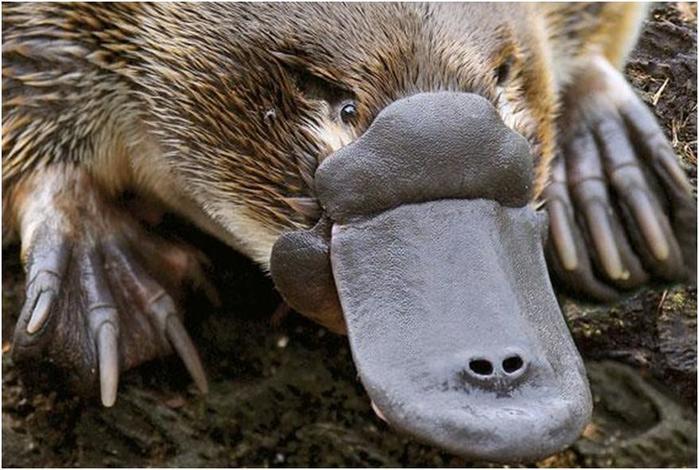 Самые необычные ядовитые животные