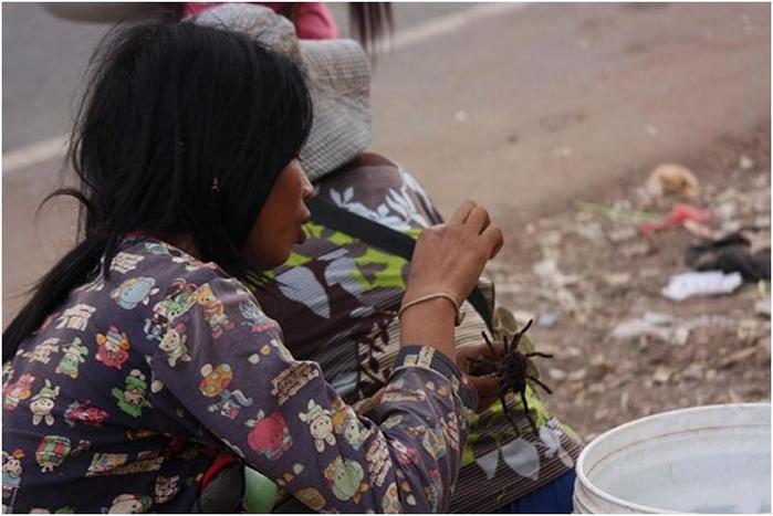 Как в Камбодже едят пауков