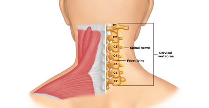Гимнастика Бутримова нормализует кровообращение и восстановит правильное положение позвонков шеи