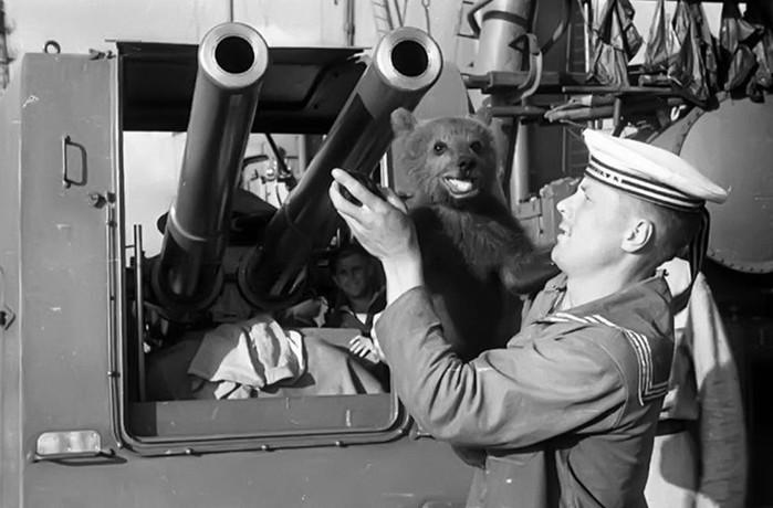 Четвероногие помощники моряков на кораблях