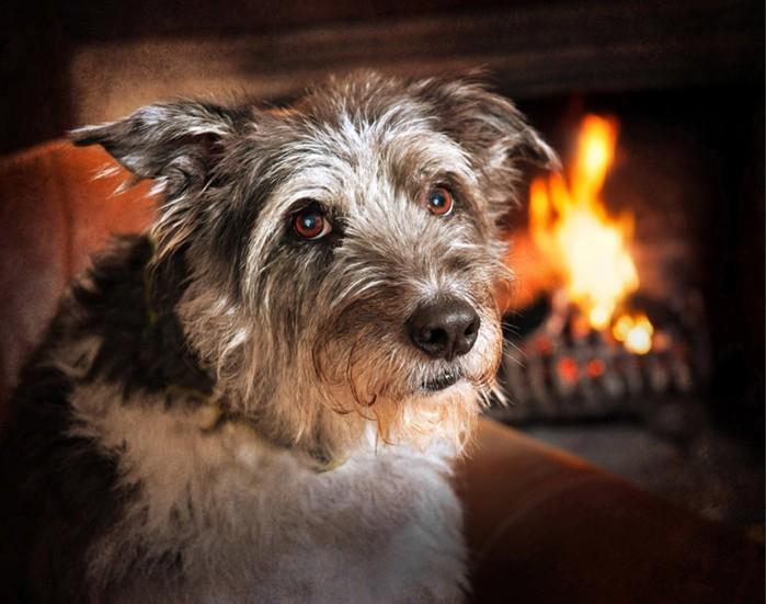 Конкурс собачьей фотографии Kennel Club Dog Photographer